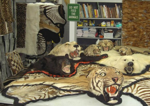 Wild Bill's Furs - Trophy Hospital For Restoration and Repair of Animal Rugs,  Heads & Furs